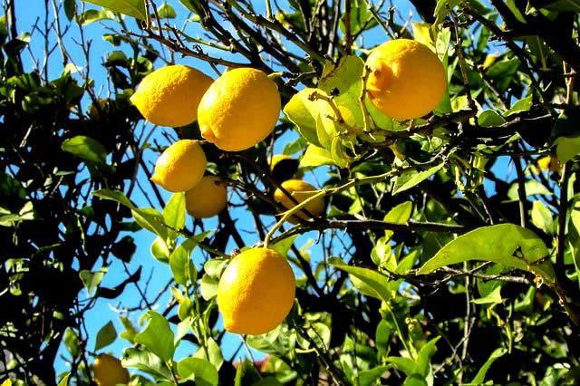 南フランスの「レモンの街」を体感するフレグランス
